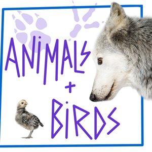 Image pour 'Animals & Birds'