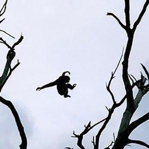 Image for 'Live - Planta Baja 19/06/2008'