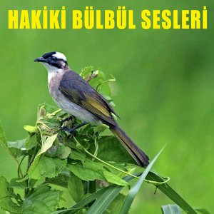 Image for 'Hakiki Bülbül Sesleri 8'