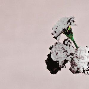 Bild für 'All of Me - Tiësto's Birthday Treatment Remix - Radio Edit'