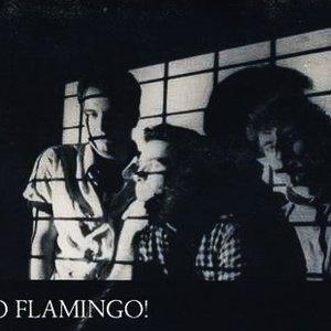 Image for 'go flamingo!'