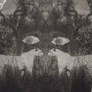 Imagen de 'Soutu'