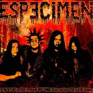 Image for 'Especimen'