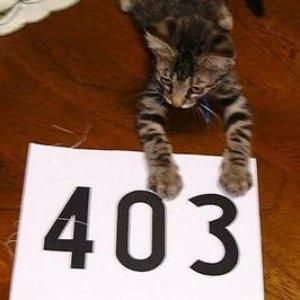 Immagine per '403'