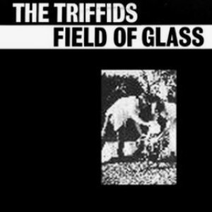 Image for 'Field of Glass'