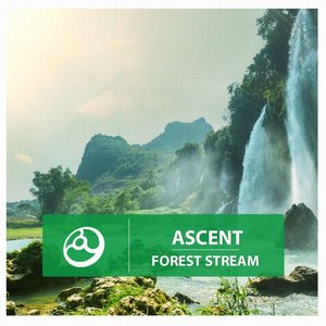 Image for 'Forest Stream'