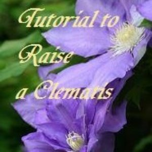 Image for 'Tutorial to Raise a Clematis'