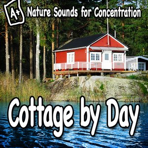 Image pour 'Forest Sounds at the Cottage for Healthy Meditation'