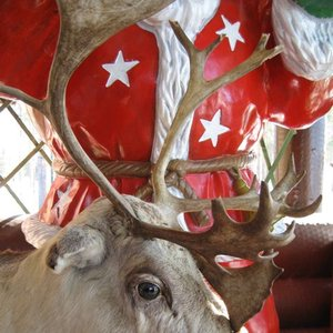 Image for 'Rudolph Eindeer'