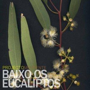 Image pour 'Baixo os eucaliptos'