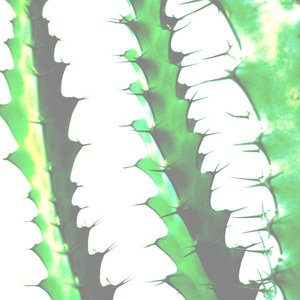 Image for 'Music for the Succulents'