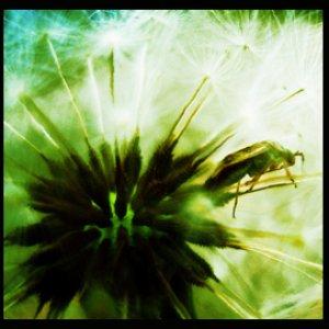 Image for 'Octubre verde'