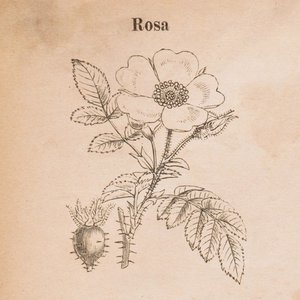 Image for 'Rosa EP'