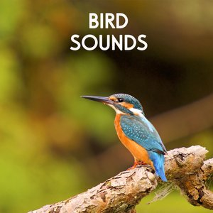 Image for 'Bird Sounds - Morning Birds for Relaxation, Meditation, Yoga , Naturescapes, Forest Ambience and Spa'