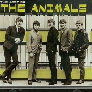 Imagen de 'The Most of the Animals'