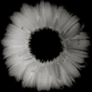 Image for 'zanzo'