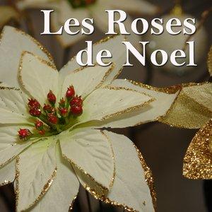 Image for 'Les roses de Nœl'