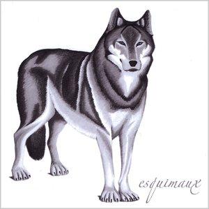 Imagen de 'Wolf'