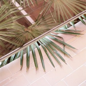 Image for 'PALM'