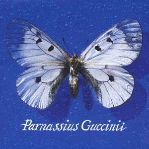 Image for 'Parnassius Guccinii'
