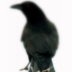 Image for 'The Alternate Universe Of Lost Crow 2008'