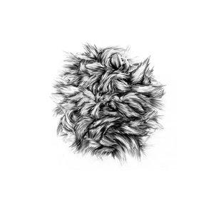 Image for 'Bark Of A Cedar'