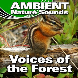 Image for 'Voices of the Forest (Nature Sounds)'