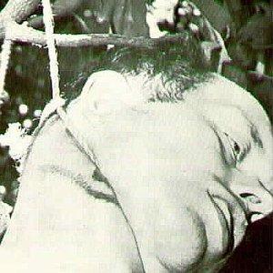 Image for 'Chimora'