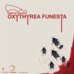 Image for 'oxythyrea funesta'