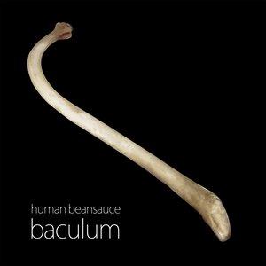Bild för 'baculum'