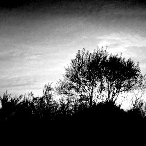 Image pour 'Проект Осень'