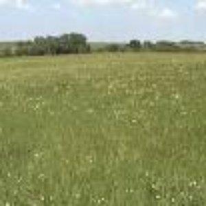 Image for 'Soil'