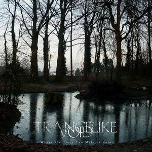 Imagem de 'Where the Trees Can Make it Rain'