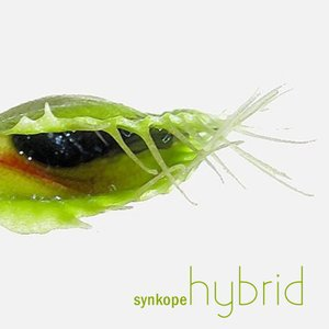 Image for 'Synkope - Hybrid'