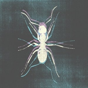 Image for 'Kiko'