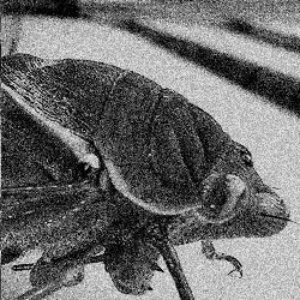 Image for 'Cicada Molting'