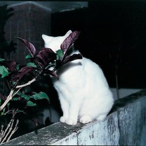 Image for '東京カラー'