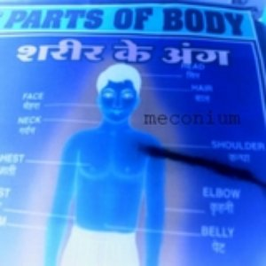 Image for 'parts of body'