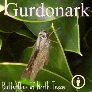 Image for 'Butterflies of North Texas'