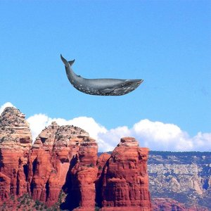 Image for 'Electronic Whale'