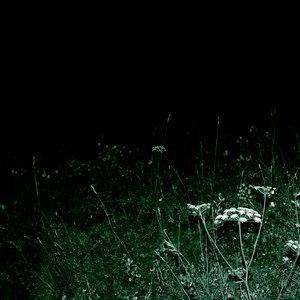 Image for 'Nightwalk'