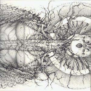 Image pour 'Mundus Numen'