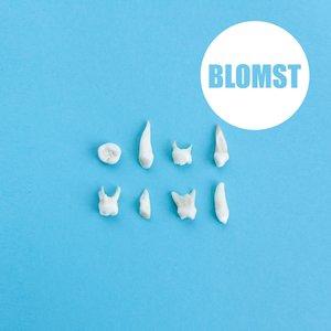 Image for 'Blomst'
