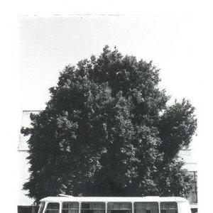 Image for 'Komische Pilze Compilation'