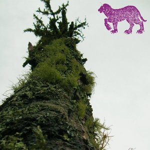 Image for 'The Faint Smell of Moss'