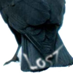 Image for 'The Alternate Universe Of Lost Crow 2009'