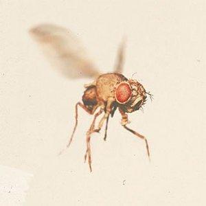 Image for 'Sektion JaKa'