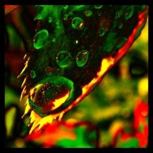 Bild för 'Lucid Daydreaming'