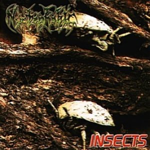 Image for 'Insects'