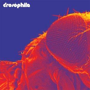 Image for 'Drosóphila'